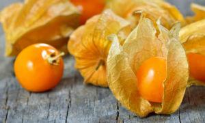 Физалис обыкновенный : ягода-украшение с полезными свойствами