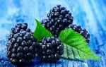 Лесная ежевика — ягода цвета ночи