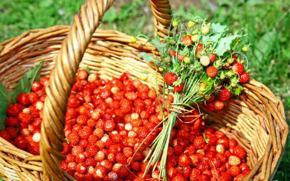 корзинка ягод