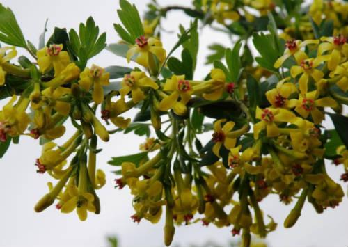 цветы йошта