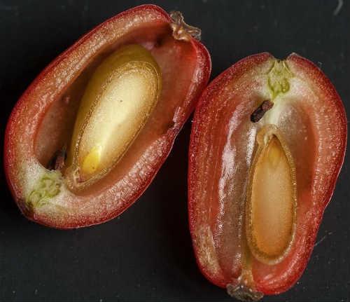 ягоды в разрезе