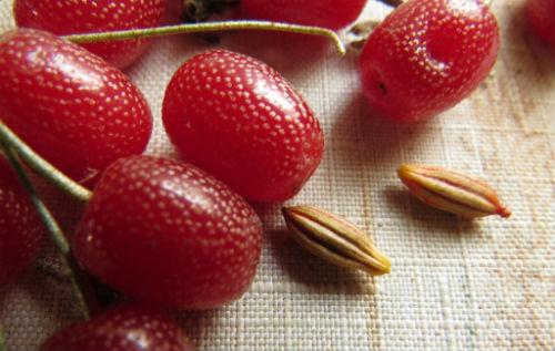 ягоды гуми